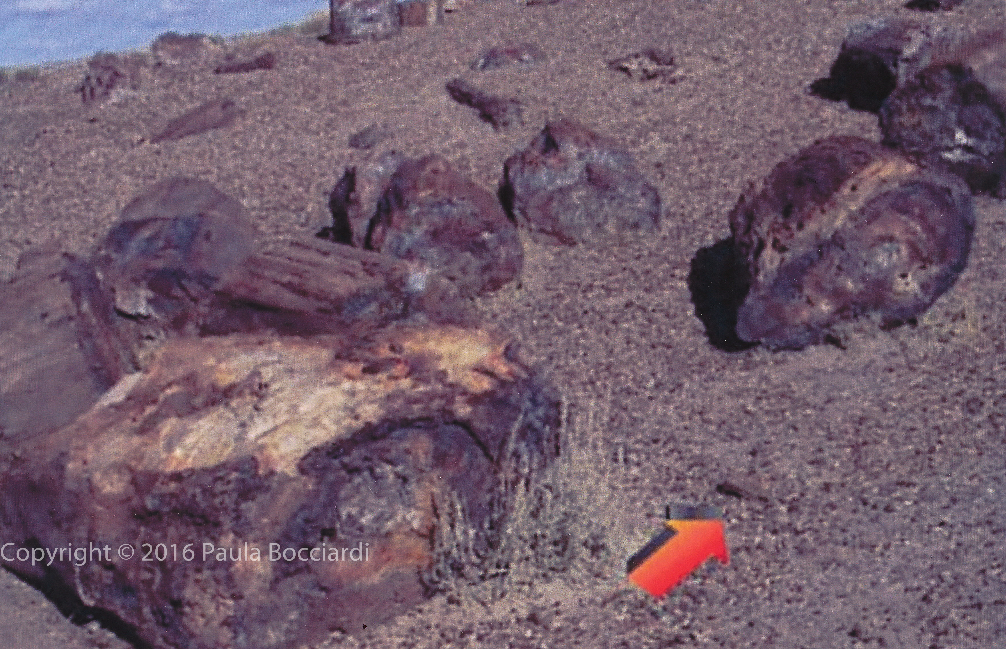 Petrified wood with watermark