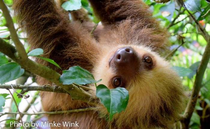 A sloth's guide to exercise