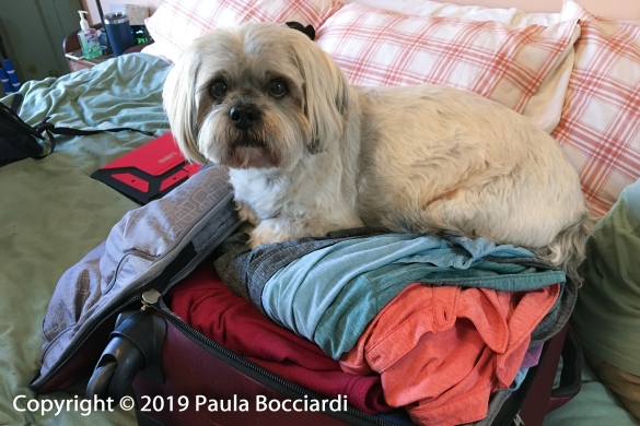 001_Buster_home_Road Trip, Spring 2019