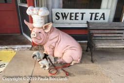 023_Buster_Twisted Tulip pig, Vega, TX_Road Trip, Spring 2019