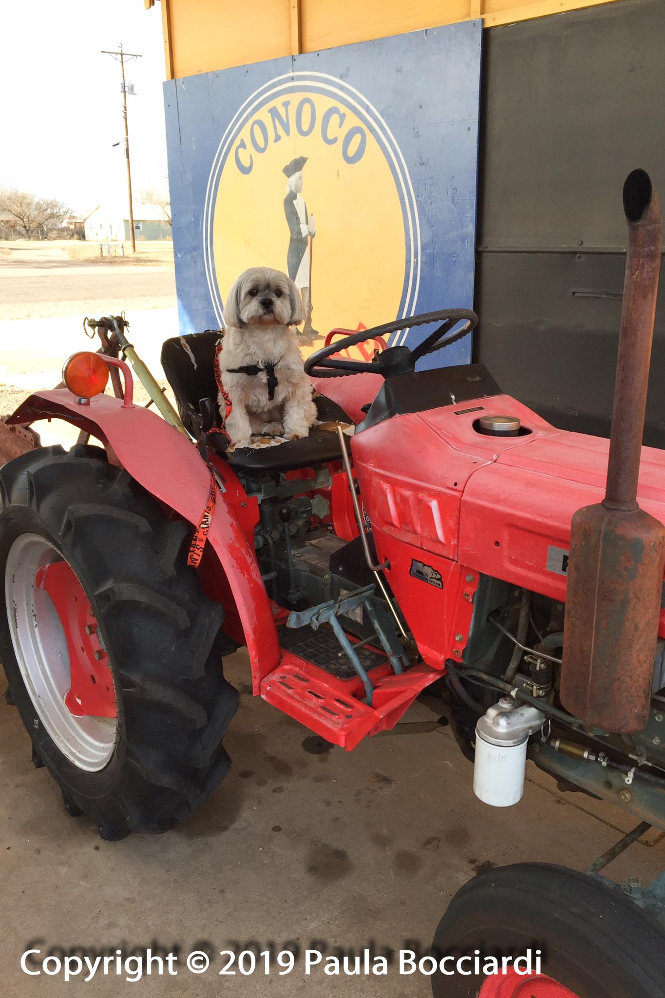 036_Tucumcari, NM_tractor_Buster 1